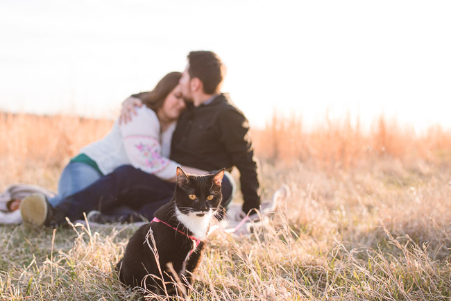 Shawnee Mission Park engagement session with cat